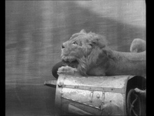 Fearless Egbert and His Lion – The Collins Famous Death Riders: Many of you may ...