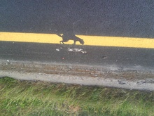 Why did the squirrel cross the road?